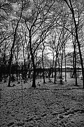 4Black_White_Trees.jpg