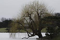 5Lone-Willow.jpg