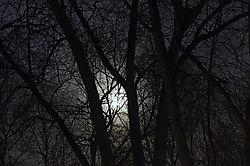 7Moonlit_Trees.jpg