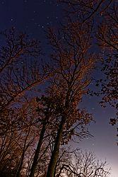 8Trees_and_Stars.jpg