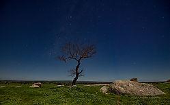 170327_Nikonians_Meditation_4_-_Reach_-_Dog_Rocks_in_Moonlight.jpg