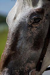 Horse_Aug1_1CR.jpg