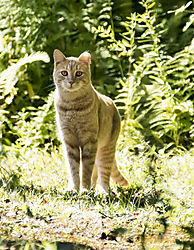 Meow_Aug28_1CR.jpg