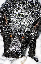 SnowPolly_Jan42018_4CR.jpg