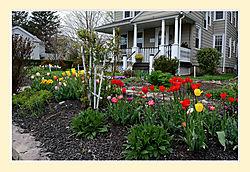 Tulips61.jpg