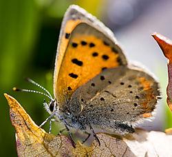 Butterfly_Oct1_1CR.jpg
