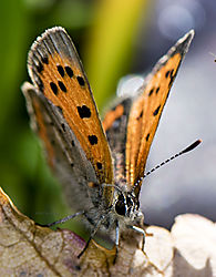 Butterfly_Oct1_3CR.jpg
