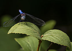 Dragonfly_Aug11_2019_CR2.jpg