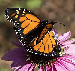 Monarch_Oct15_7CR.jpg