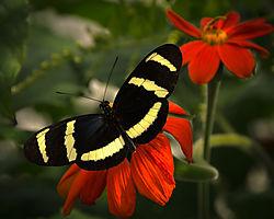 butterfly56.jpg