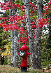 Fire_Hydrant_Red_Leaves.jpg