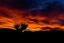 Joshua_Tree_National_Park-8-2.jpg