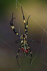 Arachne_21_Oct_17_Low_Res.jpg