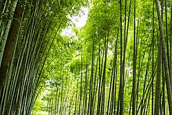Arashiyama_12_Aug_2018_Low_Res.jpg