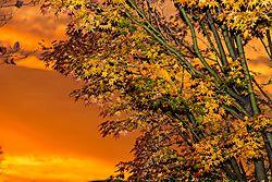 Autumn_Sunset.JPG