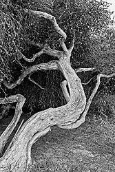 B_W_Tree_31_May_2021.jpg