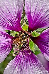 Bee_9_Apr_2021.jpg