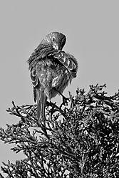 Bird2_1_May_2021.jpg