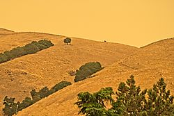 California_Firelight_9_Sep_2020.jpg