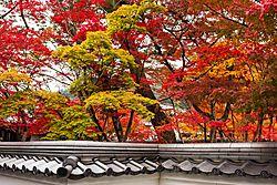 Eikando_Temple3_Fall.JPG