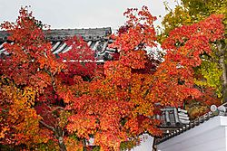 Eikando_Temple_Fall.JPG