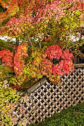 Kyoto_Fence.JPG