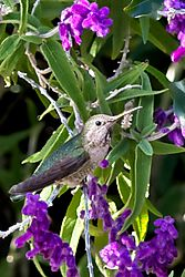 Mission_Hummingbird2_29_Mar_2021.jpg