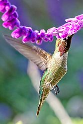 Mission_Hummingbird_31_Mar_2021.jpg