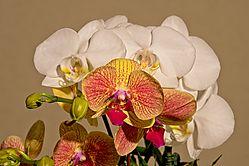 Orchid_Nik105_12_June_2021.jpg