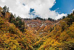 Shirakawa_White_Road2_19_Oct_2018_Low_Res.jpg