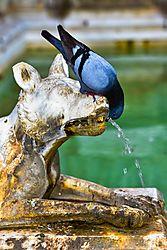 Siena_Bird_Fountain_Best_Jun_2016_Low_Res.jpg