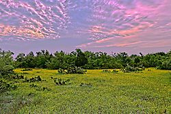 Texas_Sunrise_9_April_ff2020_Low_Res.jpg