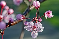 Ume_Dew2_28_Feb_21.jpg