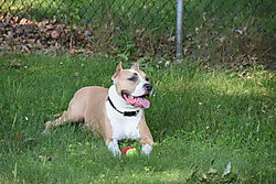 2015-071115_My_Pictures_071115_136.jpg