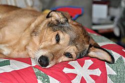 A_dog_s_life.jpg