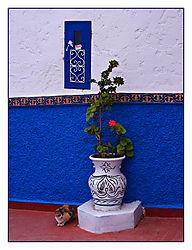 Rabat_Cat.jpg