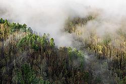 Cataloochee-Fog.jpg
