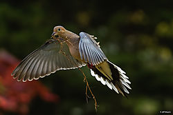 DoveCorrrected-91.jpg