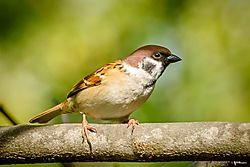 bird43.jpg