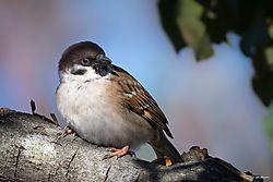 morebirds-4.jpg