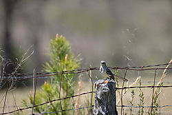 smallMObirds-2.jpg