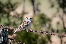 smallMObirds-4.jpg