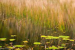 The_Tarn-Monet_Look1.jpg