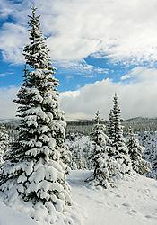Yellowstone_Snow.jpg