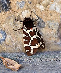 moth_1_1005x1200.jpg
