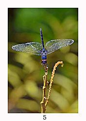 5_Basking_Dragonfly_Nature.jpg