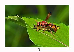 9_Tranqualizing_Nature.jpg