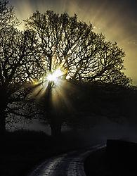 Misty_Tree_Sunrise_Lweb_v1_DSC0268_copy.jpg