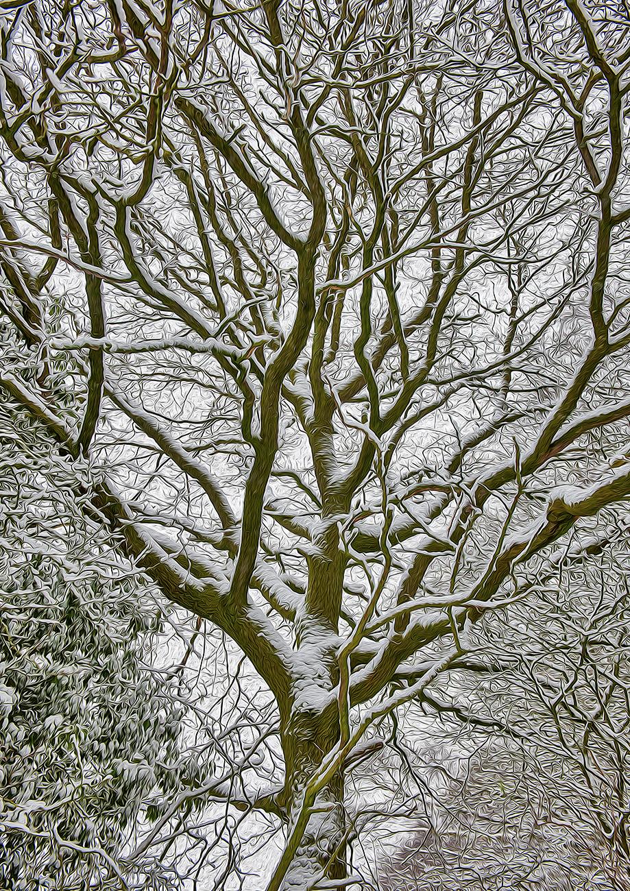 Up_into_tree_stylistic_Lweb_v1_DSC2853_copy