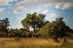 2017_Africa-168.jpg